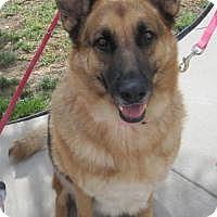 Adopt A Pet :: Sheba - Costa Mesa, CA