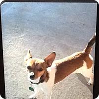 Adopt A Pet :: Jack - springtown, TX