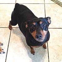 Adopt A Pet :: Yo-Yo - Davenport, IA