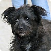 Adopt A Pet :: April - Palmdale, CA