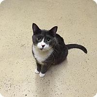 Adopt A Pet :: Belle - Blasdell, NY