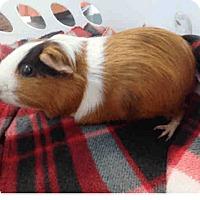 Adopt A Pet :: *Urgent* Charlie - Fullerton, CA