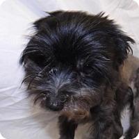 Adopt A Pet :: Tiny - Oxford, MS