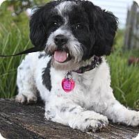 Adopt A Pet :: Cody - Wichita, KS