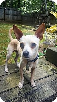 Chihuahua Mix Dog for adoption in Alpharetta, Georgia - Eldon