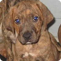 Adopt A Pet :: Titan - Saleigh Pup - Clear Lake, IA