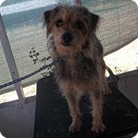 Adopt A Pet :: Dutchess - Bonifay, FL