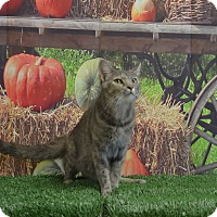 Adopt A Pet :: Jade - Lebanon, MO