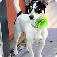 Adopt A Pet :: Pearl - Dalton, GA