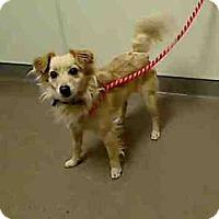 Adopt A Pet :: Mobie - Evergreen, CO