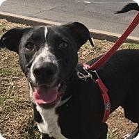 Adopt A Pet :: PAULA - Willows, CA