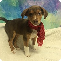 Adopt A Pet :: Smidge - Joliet, IL