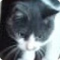 Adopt A Pet :: Monkey - O'Fallon, MO