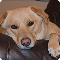 Adopt A Pet :: Paisley - Rockford, IL