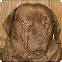 Adopt A Pet :: Carmen - Newport, VT
