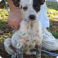 Adopt A Pet :: SOPHIE - P, ME