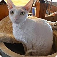 Adopt A Pet :: Tiffany - Davis, CA