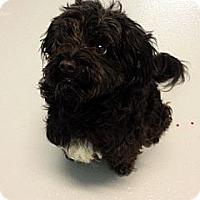 Adopt A Pet :: Atticus - Muskegon, MI