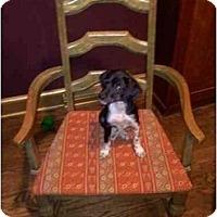 Adopt A Pet :: Riley - Albany, NY