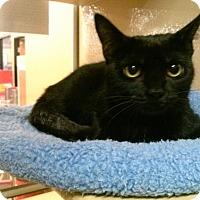 Adopt A Pet :: Cinder - Frederick, MD