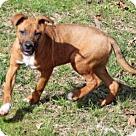 Adopt A Pet :: LYCA