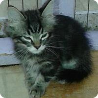 Adopt A Pet :: Ace - Whittier, CA