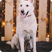Adopt A Pet :: Soloman - Portland, OR