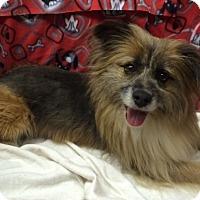 Adopt A Pet :: Racoon In Kilgore, TX - Austin, TX