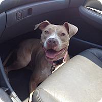Adopt A Pet :: Mitzi in CT - East Hartford, CT