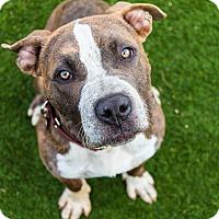 Adopt A Pet :: Sparkplug (male) - Los Angeles, CA