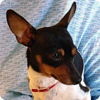 Adopt A Pet :: Jaeger - San Francisco, CA
