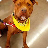 Adopt A Pet :: Mylie - Richmond, CA