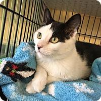Adopt A Pet :: Jewel - Island Park, NY