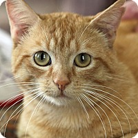 Adopt A Pet :: Blazer - Hillsboro, IL