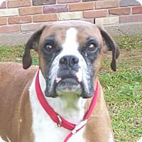 Adopt A Pet :: Buddy #7 - Lafayette, LA