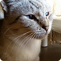 Adopt A Pet :: Sheba - Chula Vista, CA