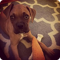 Adopt A Pet :: Clyde - Hurst, TX