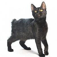 Adopt A Pet :: Alf - Oxford, MS