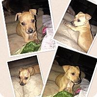 Adopt A Pet :: Taters - Baton Rouge, LA