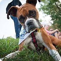 Adopt A Pet :: Kyra - Alexandria, VA