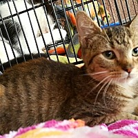 Adopt A Pet :: Tally - Lyons, IL