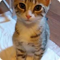 Adopt A Pet :: Elijah - Middletown, OH