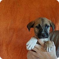 Adopt A Pet :: Fall - Oviedo, FL
