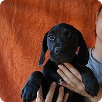 Adopt A Pet :: Albany - Oviedo, FL