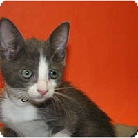 Adopt A Pet :: RETTON - SILVER SPRING, MD