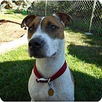 Adopt A Pet :: Diesel - Alliance, NE