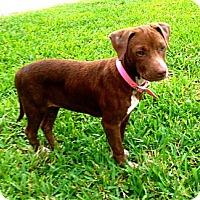 Adopt A Pet :: Marjorie - Miami, FL