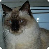 Adopt A Pet :: Mr. Purrfect - Ennis, TX
