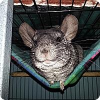 Adopt A Pet :: Joshua - Jacksonville, FL