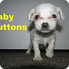 Adopt A Pet :: Baby Buttons